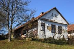 Hungarian Villige. Tornabarakony.