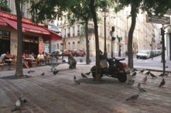 Siesta in a Paris park, with pigeons